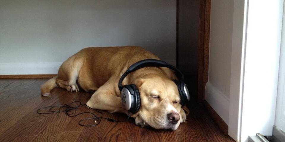 ワンちゃんはレゲエとソフトロックがお好き? 音楽が犬に与える影響の研究結果が発表される