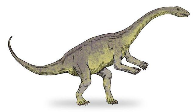 恐竜の肉付き骨、発見される。最古のタンパク質か2