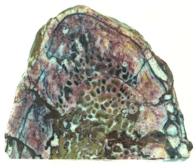 恐竜の肉付き骨、発見される。最古のタンパク質か