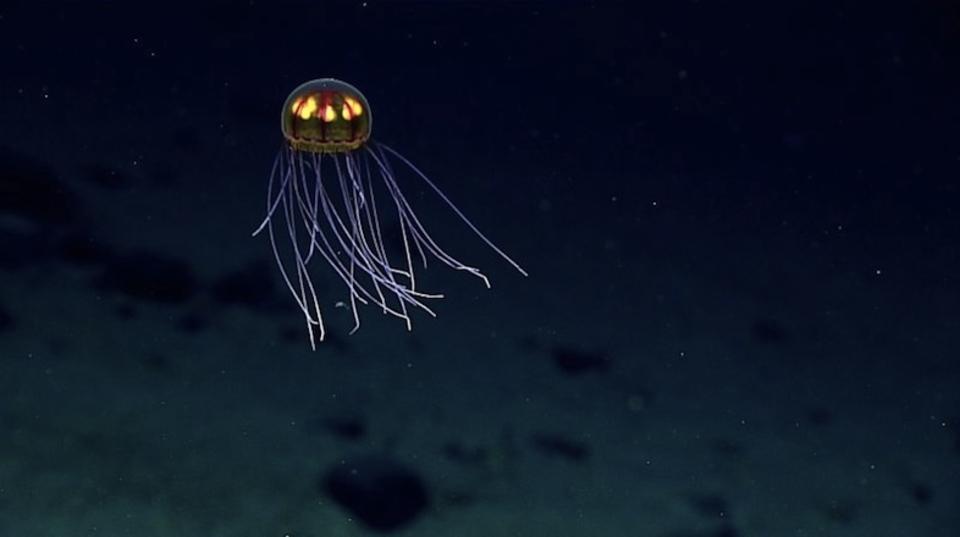 人間が出した有害物質、深海10,000mのマリアナ海溝にまで広がる…もはや地球上にクリーンな場所など無しか