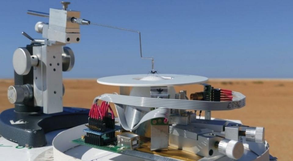 ランニングマシンで調査!サハラ砂漠のアリが自分の巣に戻るまで