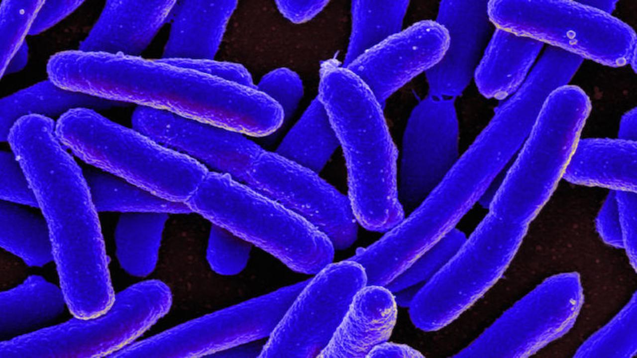 抗生物質が効かない細菌退治に。...