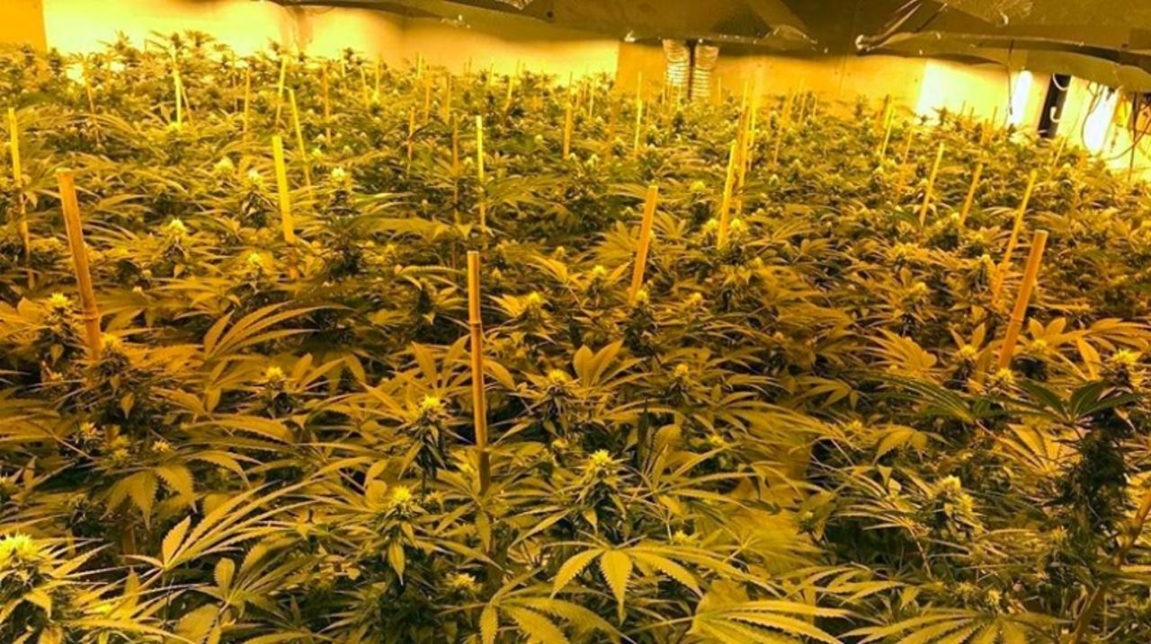 冷戦時代の核シェルターに大麻がびっしり。だれも入れない秘密空間で栽培していた人たち