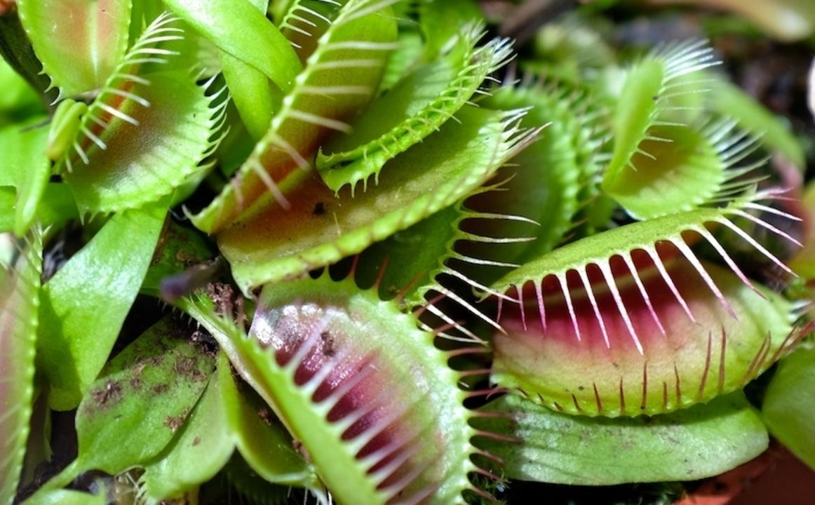 植物 食 中