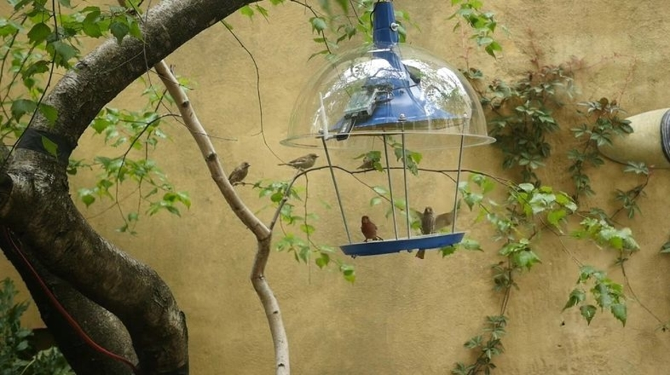 鳥はメタラー? クラシック派? PandoraBirdがお答えします