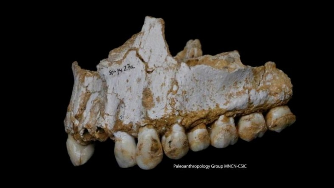歯を磨かなかったネアンデルタール人、その歯石から多彩な食習慣が判明