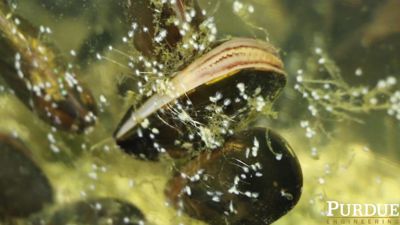先端技術も母なる海に。貝から生み出された史上最強の「水中用接着剤」