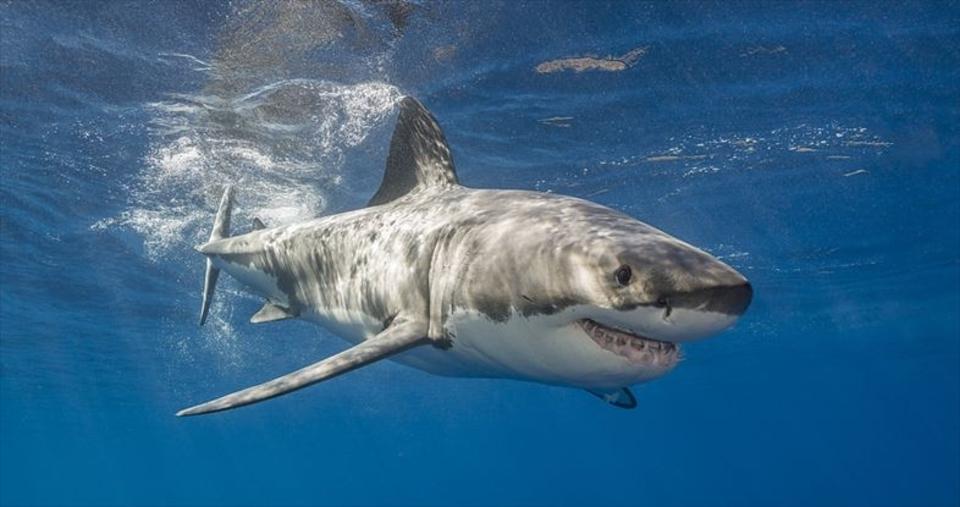いつもサメの存在を身近に感じたい...そんなアナタのためのアプリ「シャーク・トラッカー」