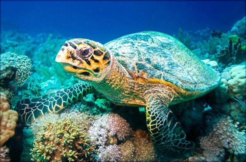 タイにて、ウミガメのお腹から915枚もの硬貨が摘出される