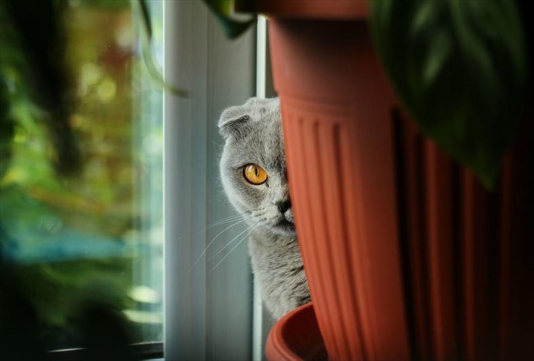 冷戦時代のCIA、16億円かけて猫をスパイにしようとして大失敗していた
