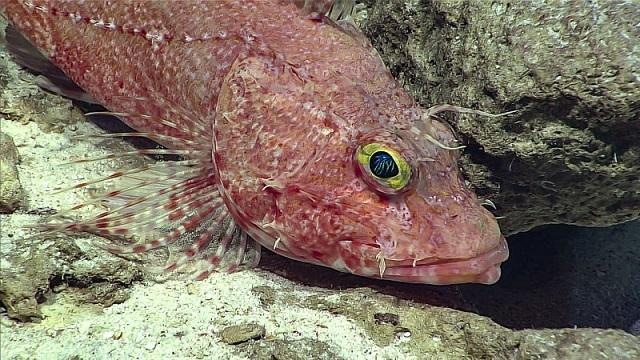 7 深海の不思議で美しい生き物たち最新版