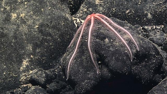 6 深海の不思議で美しい生き物たち最新版