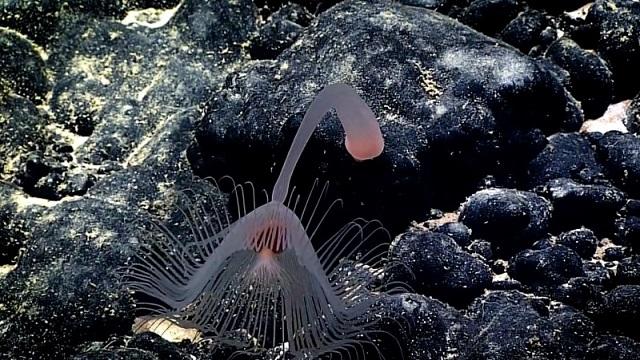 5 深海の不思議で美しい生き物たち最新版