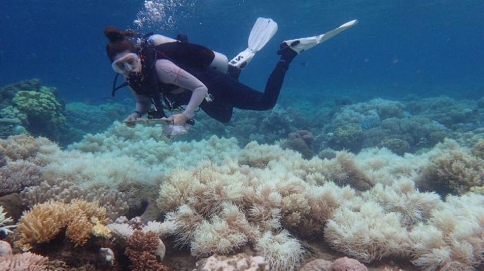グレートバリアリーフを蝕む白化現象、サンゴ礁の3分の2がすでに白化