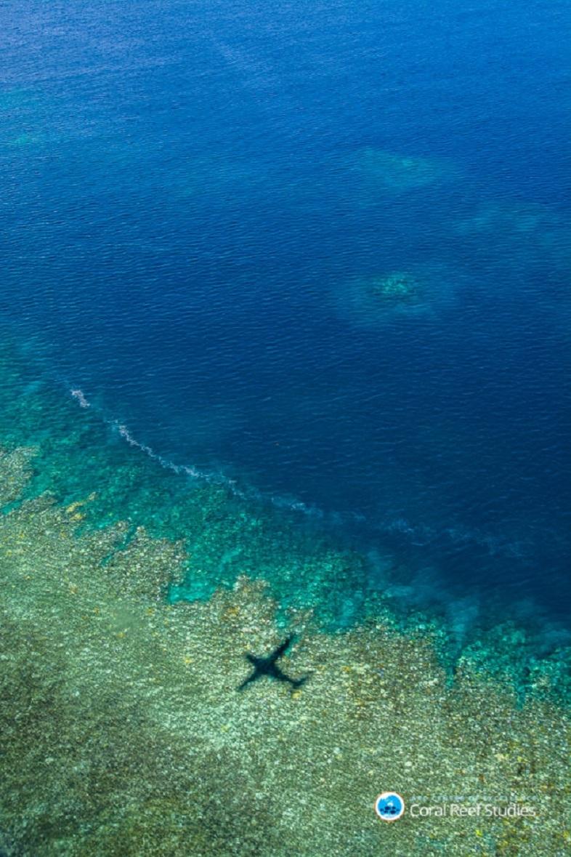 サンゴ 白化 2