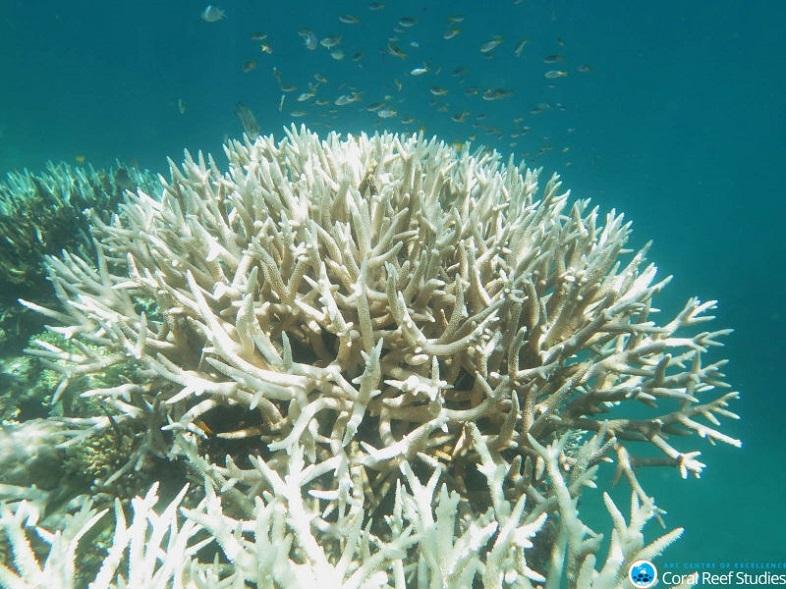 サンゴ 白化 3