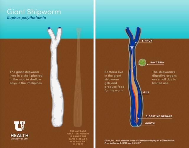 170419_giantshipworm4.jpg