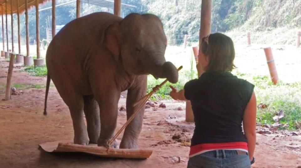 ゾウの自己認識能力がすごい! 新開発された能力テストにもすべらない~