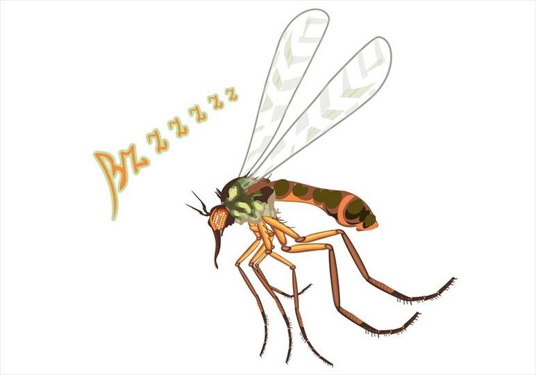 ブーン…。夏に聞くあの音は、蚊の独特な飛び方によるものだった