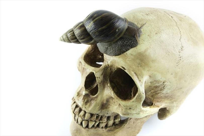 触るな危険、カタツムリが運ぶ死の感染症が増加している…