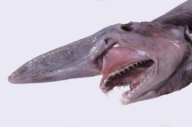 1 こわーい深海生物ベスト10