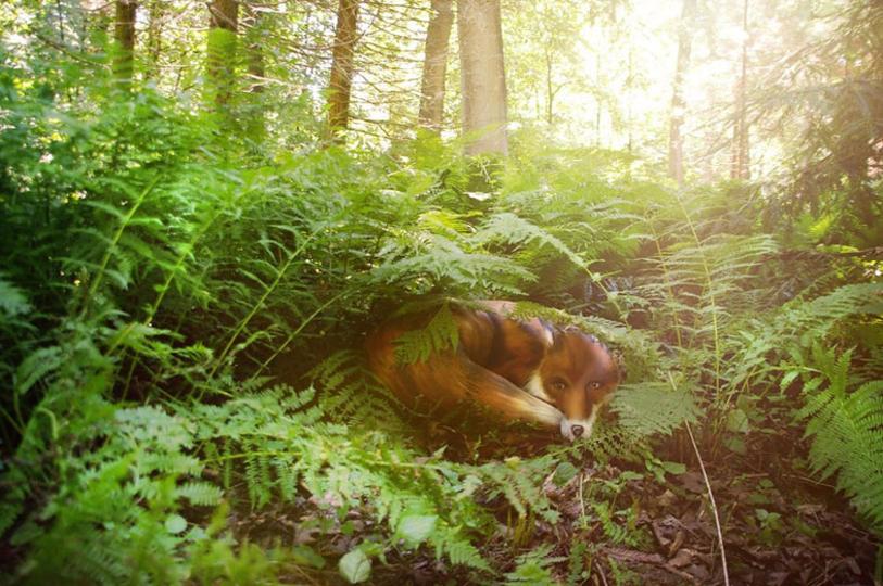 この動物、アレで表現されているんです。人間と自然とアートが融合した世界