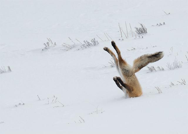 1 思わず笑っちゃう野生動物コメディー写真アワード、今年の受賞作は?