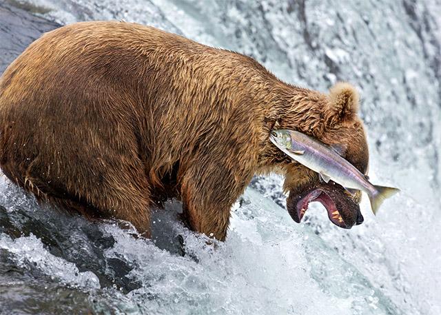 3 思わず笑っちゃう野生動物コメディー写真アワード、今年の受賞作は?