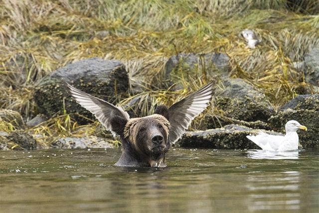 4 思わず笑っちゃう野生動物コメディー写真アワード、今年の受賞作は?