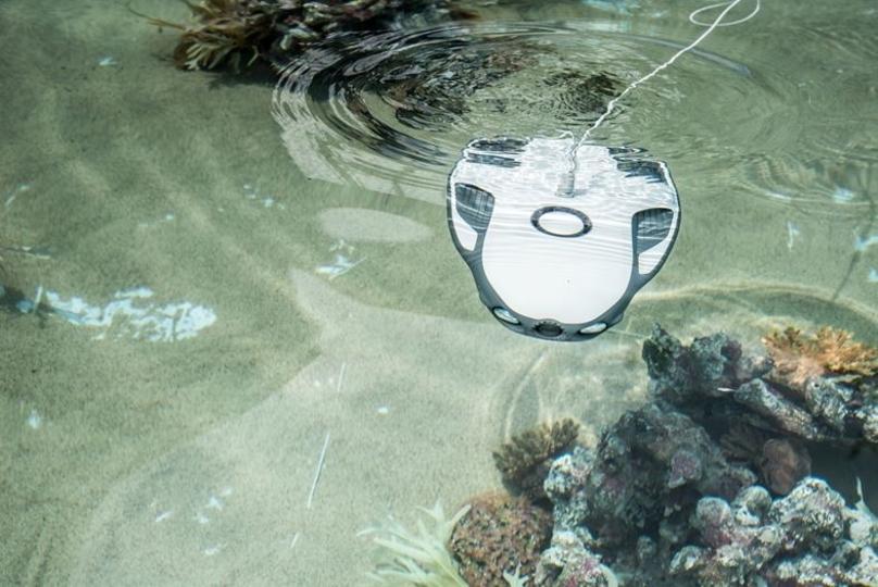 水中ドローン「PowerRay」が日本上陸。海のなか丸見えで魚釣りしてみたくない?