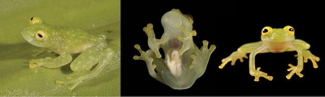 170602_skelton_frog_2.jpg