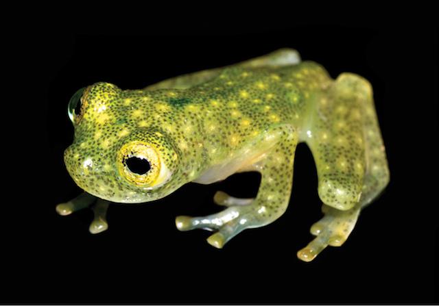 170602_skelton_frog_3.jpg