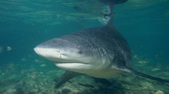 「湖でオオメジロザメ捕獲」はデマ。フェイクニュースに公式機関が声明