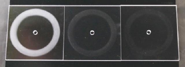 世界初ポリカーボネート樹脂ピラーレスフロントウィンドウ3
