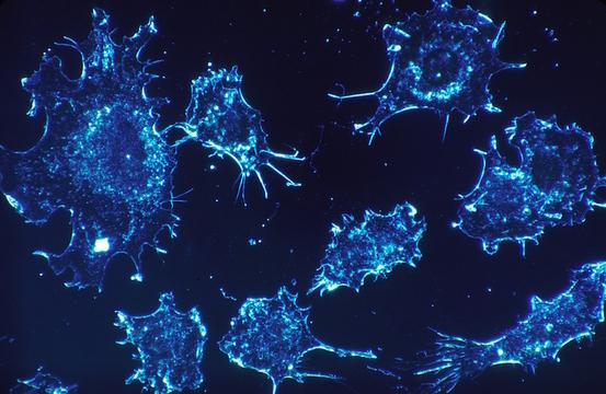 1細胞レベルでガンの転移が確認できる新技術。東大と理研がマウスで実験成功