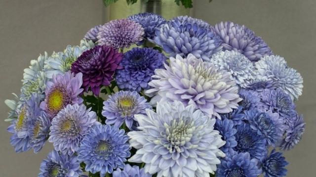 珍しい青い花は科学の力で作れるか