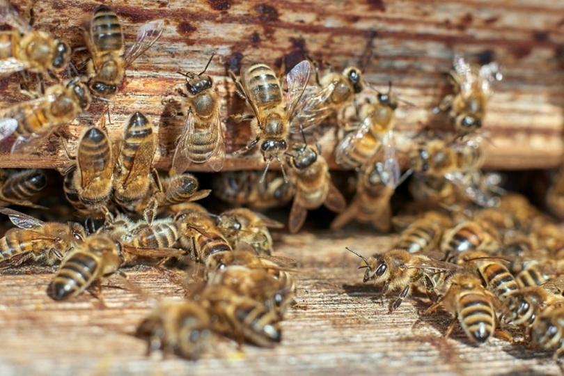 ミツバチの脳が未来のカメラに影響を与えるかも?