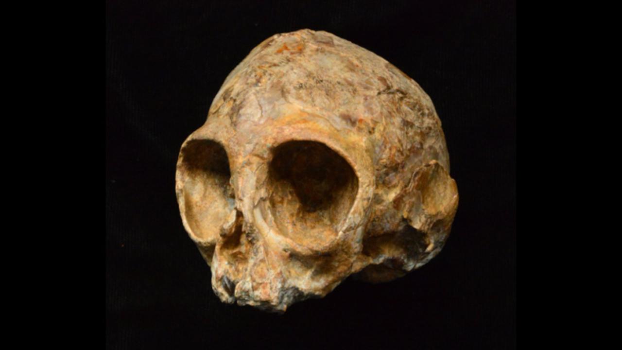 古代類人猿の頭蓋骨の化石が見つ...