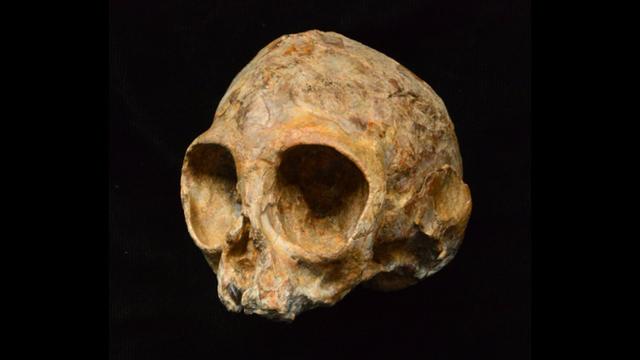 古代類人猿の頭蓋骨の化石が見つかったけれど...
