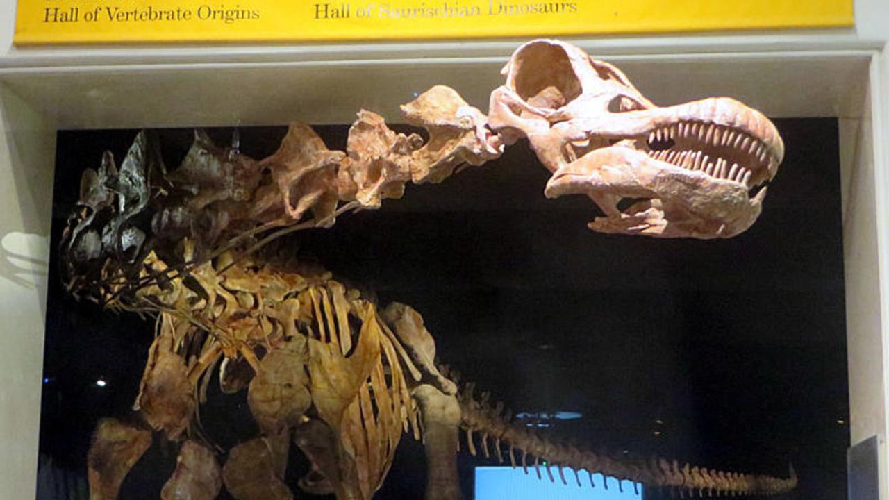 発見された新種は「陸上最大のメガ恐竜」だった