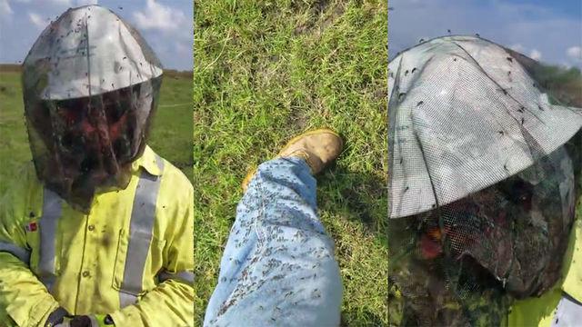 ハリケーン「ハービー」が去った後に地獄レベルの蚊が発生