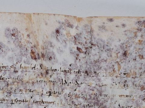 ハイテクサイエンスがを解き明かす800年前の羊皮紙のシミのナゾ
