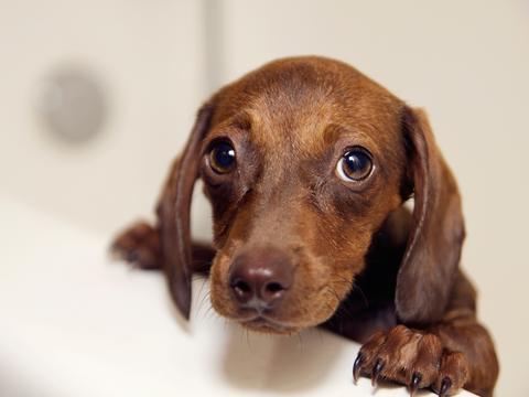犬は、人前で表情を変える。意図的か直感的な反応なのかはまだわからない