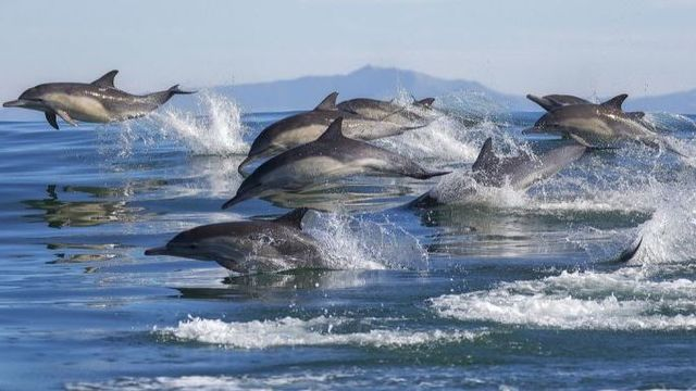 イルカも物忘れしているかも。野生動物でも初めてアルツハイマー病の痕跡が発見される