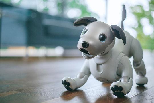 12年ぶりに帰ってきたワン! かわいさ+賢さアップの犬型ロボット「aibo」来年1月発売