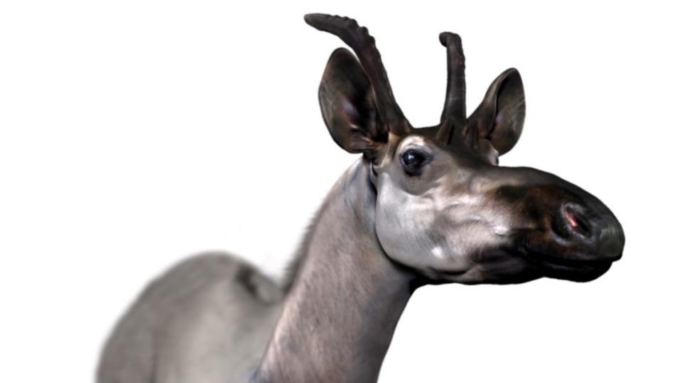キリンのご先祖さま? 「D.レックス」の首は長くなかった