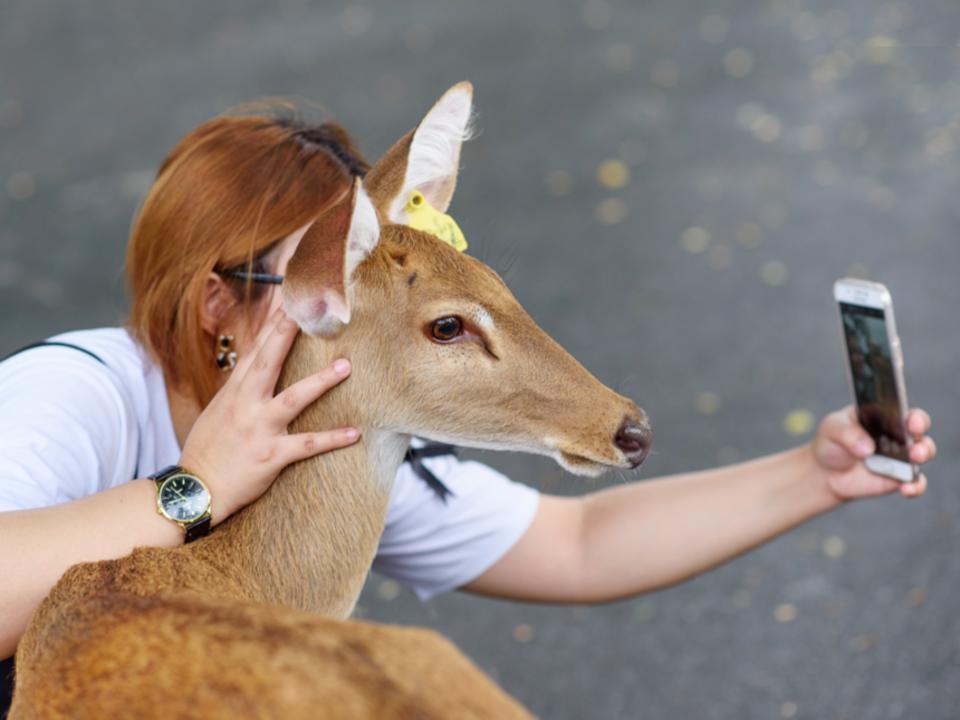 Instagramが野生動物保護に反するハッシュタグに警告