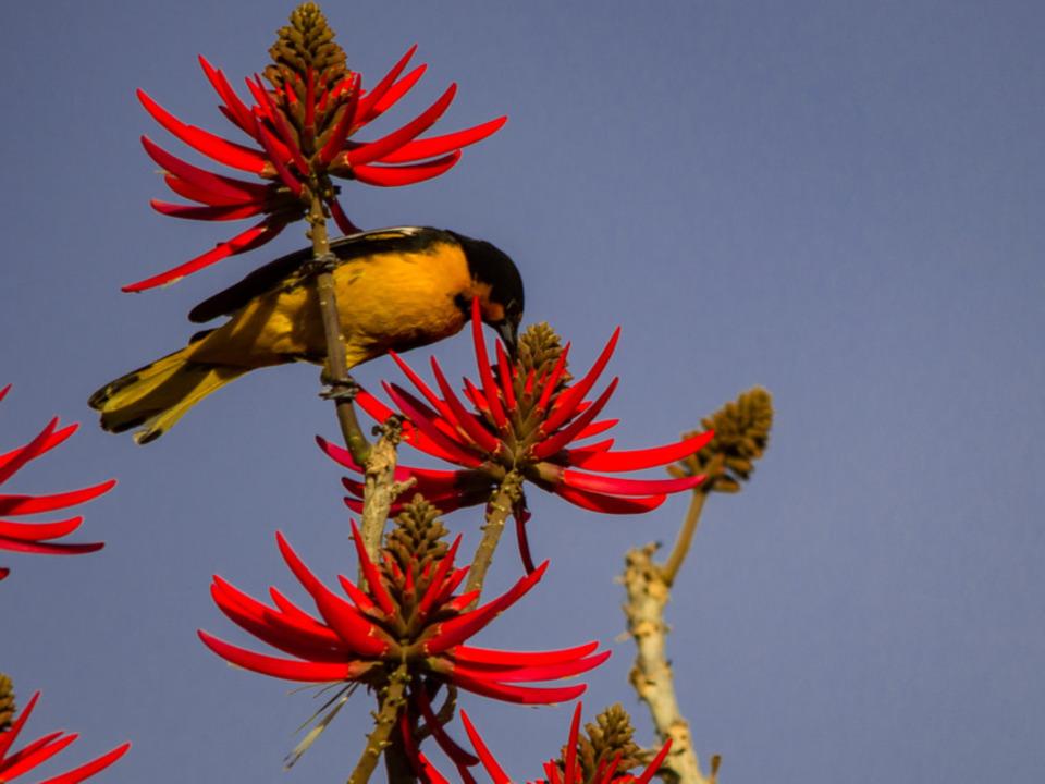 たった1羽の鳥が生んだ、22万3000ドルの経済効果