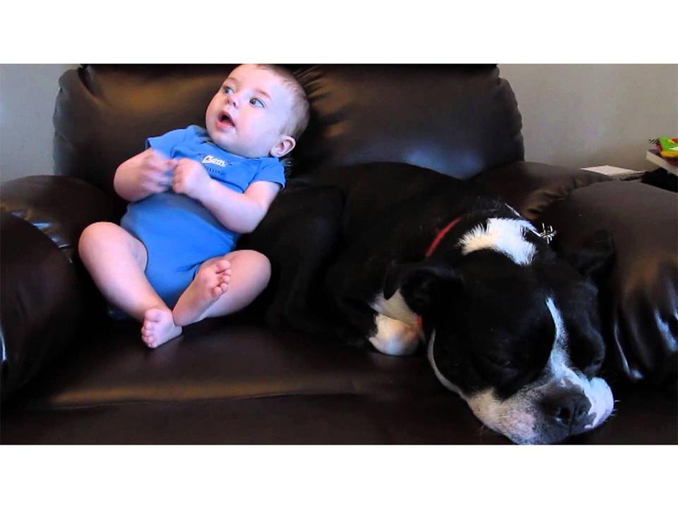 「赤ちゃんウンチ犬」動画スパムに次々とひっかかる政治家・知識人の皆さん