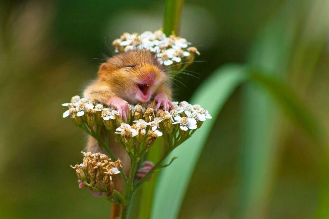 癒される...! 2017年、野生動物を撮影した最高の面白写真